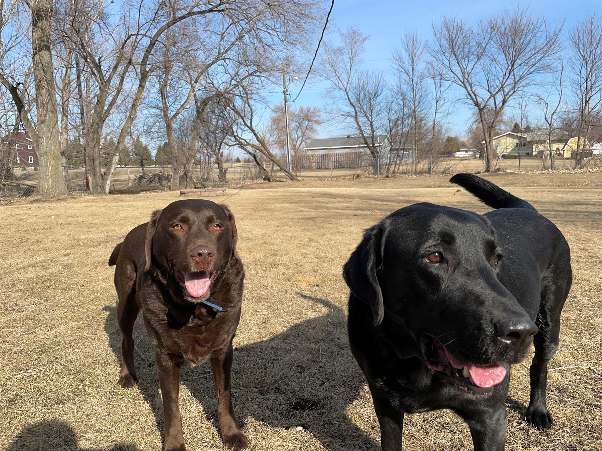 Dog Poop Services Fargo