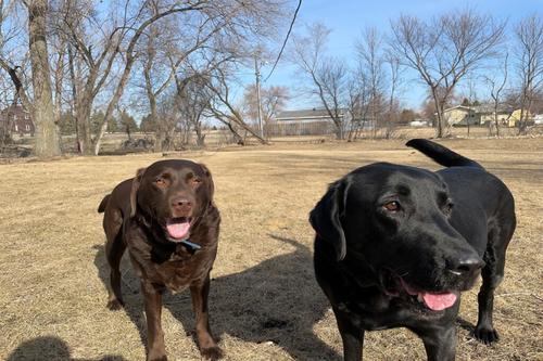 Dog Waste Removal Fargo